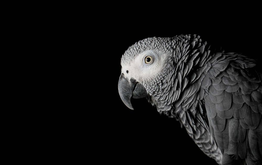 vie-magazine-parrots-feature